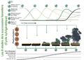 Forest succession depicted over timeFr.png