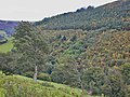 Forestry on Banc Bronderwgoed - geograph.org.uk - 986701.jpg