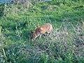 Fox23.jpg