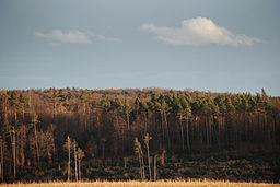 Felder und Wälder in Schönaich