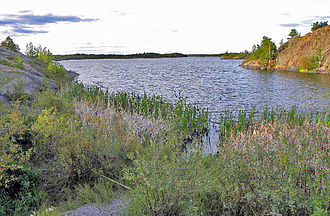 Frame Lake - Image: Frame Lake weeds and rocky shoreline