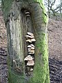 Fungi - geograph.org.uk - 316271.jpg
