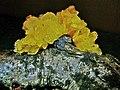 Fungi 1090066.JPG