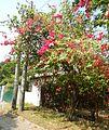 FvfBulacan5940 14.JPG