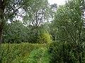 GOC Redbourn 065 Woodland near the River Ver (24082320351).jpg