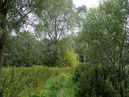 GOC Redbourn 065 Woodland near the River Ver (24082320351)