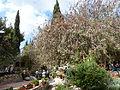 Garden Tomb P1190170.JPG