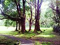 Garden in Curepipe - Mauritius.jpg