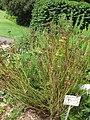 Gardenology.org-IMG 2881 rbgs11jan.jpg