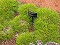 Gardenology.org-IMG 8204 rbgc10dec.jpg