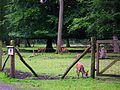 Gehege Sikahirsche Wildpark Alte Fasanerie Juni 2012.JPG