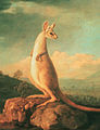 George Stubbs, A portrait of the Kongouro (Kangaroo) from New Holland, 1772.jpg