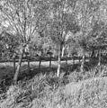Gevlochten erfscheiding - Hoornaar - 20117000 - RCE.jpg