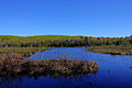 Gfp-michigan-porcupine-mountains-state-park-pond-and-forest.jpg