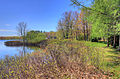 Gfp-michigan-twin-lakes-state-park-shore-with-tall-plants.jpg