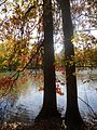 Gillette New Jersey two trees on a riverbank in autumn.jpg