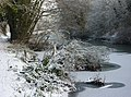 Gipping riverbank with snow and ice - geograph.org.uk - 1653354.jpg