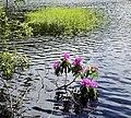 Glencoe Lochan. - panoramio (3).jpg