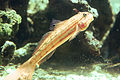 Goby at the Green Connection.jpg