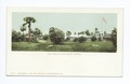 Golf Links, Palm Beach, Fla (NYPL b12647398-62381).tiff