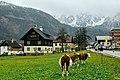 Gosau, Austria (45559916184).jpg