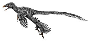 Description de l'image Graciliraptor.jpg.