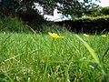 Gras.jpg