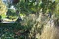 Grasses - Leaning Pine Arboretum - DSC05510.JPG