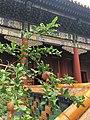 Great Lama Temple Beijing IMG 5768 western pavillions.jpg