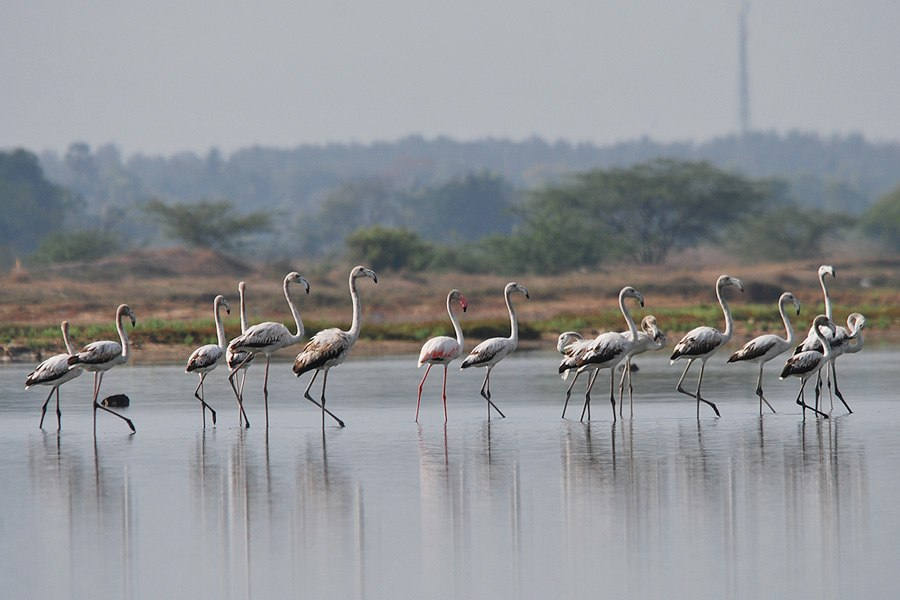 Birding in Chennai - Howling Pixel