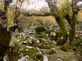 Green trees and rocks.jpg