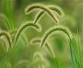 Greens of summer (6954134512).jpg