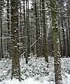 Guadineer knob in winter.jpg