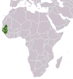 Guinea baboon - Image: Guinea Baboon area