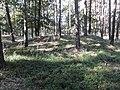 Hügelgräber Annaburg Nordwest.jpg