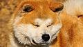 HIDEAKI GO Namitori.jpg