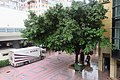 HK CWB 銅鑼灣 Causeway Bay 摩頓台 Moreton Terrace outdoor carpark n trees Sept 2018 IX2 01.jpg