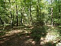 Hambach forest 46.jpg