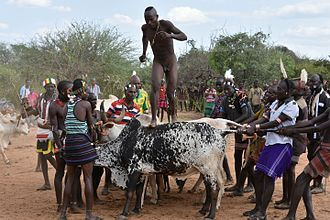 "Rite of passage - The Hamar are known for their custom of ""bull jumping,"" which initiates a boy into manhood."