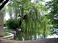 Hamerský rybník, vrby u výpustě (01).jpg