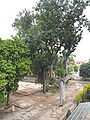 Hanoi Citadel 0347.JPG
