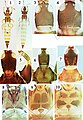 Haplothripine species from Hawaii (10.3897-zookeys.662.12107) Figures 1–10.jpg