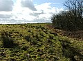 Headland - geograph.org.uk - 723181.jpg