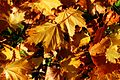 Herbstlaub - panoramio (4).jpg