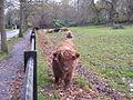 Highland Cattle, Pollok Park - geograph.org.uk - 76660.jpg