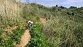 Hiking Towsley Canyon - Santa Clarita, California (3361476728).jpg