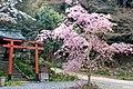 Himukai Daijingu (3530075382).jpg