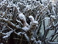 Hoar frost twigs of the hedgerow 2.jpg