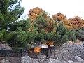 Holidays Greece - panoramio (375).jpg