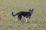Hond «Op der Heed»-102.jpg